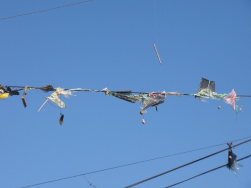 Kites stranded in the wire poles